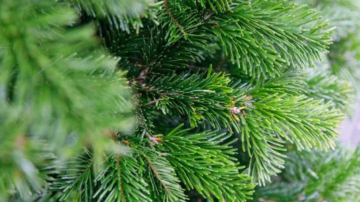 В Волгограде раскроют секреты празднования Рождества и Нового года в Царицыне