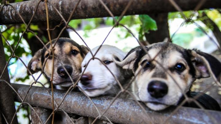 «Это клевета»: директор ростовского приюта для животных отрицает причастность к гибели сотен питомцев
