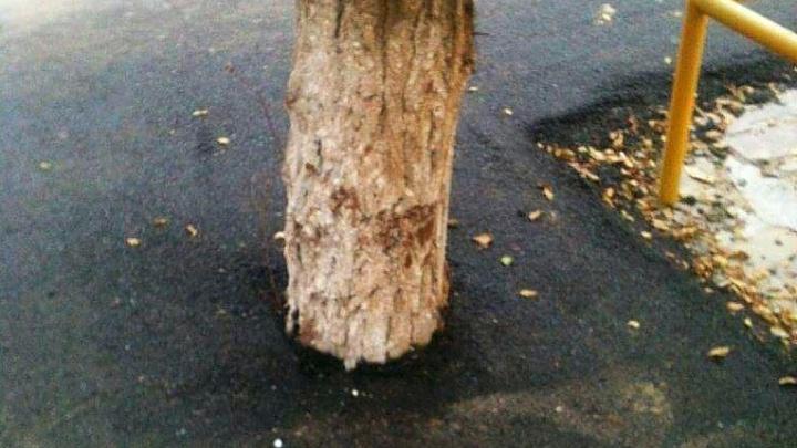 В Волгограде закатывают в асфальтобетон деревья и клумбы