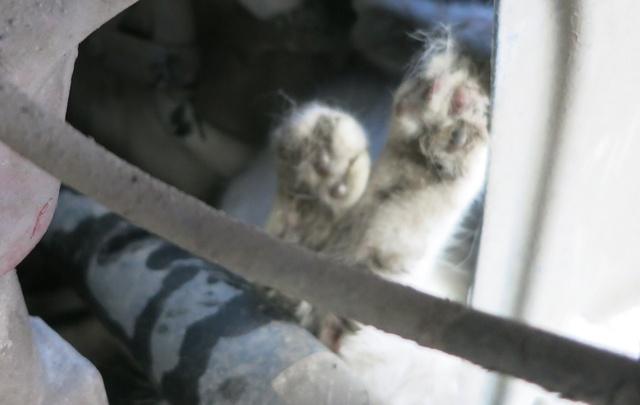 Тюменские спасатели освободили кота, застрявшего под автомобилем