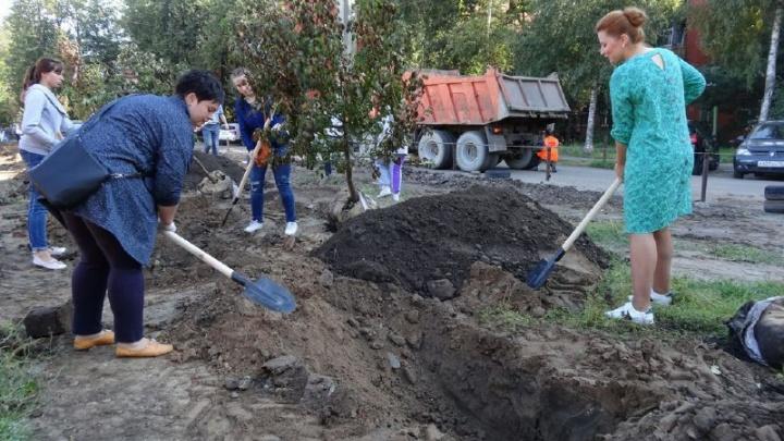 В центре Ярославля появился яблоневый сад