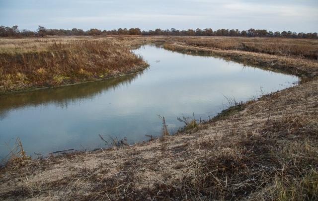 В Волгоградской области восстановят более тысячи гектаров леса