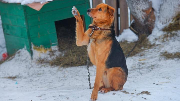"""Отловить четыре с половиной тысячи бродячих собак в Екатеринбурге поручили """"Спецавтобазе"""""""
