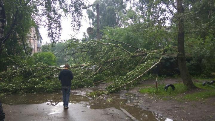 На Пятерке огромное дерево рухнуло прямо во дворе