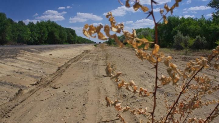 Под Волгоградом пообещали заменить высохшие в раскаленном песке деревья