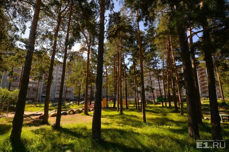 Между жилыми домами встречаются сосновые заросли.