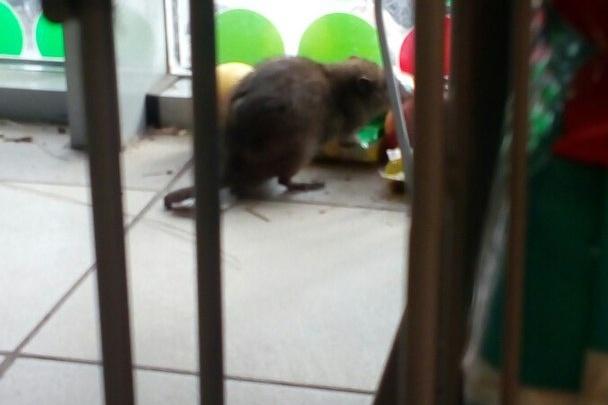 Крысиное царство: грызуны бегают по залу одного из ярославских магазинов