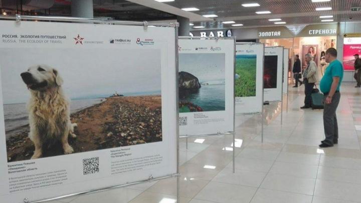 Пейзажи Кенозерья и «Русской Арктики» украсили аэропорт Шереметьево