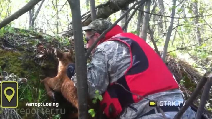 В лесах Башкирии спасли застрявшего лосёнка
