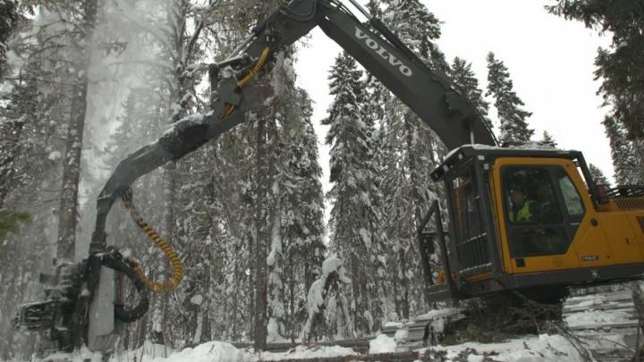 «Титан» инвестировал в техперевооружение трех леспромхозов Пинежья около 450 миллионов рублей