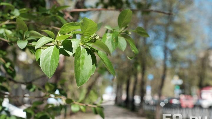 «Сохраним окружающий мир»: по улицам Перми пройдет экологический марш