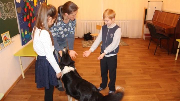 Детей-аутистов в Архангельске научат навыкам общения с помощью собак