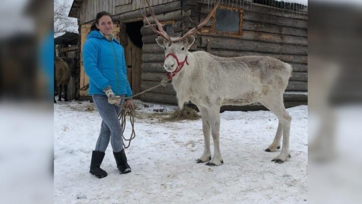 В Ярославле продают северных оленей