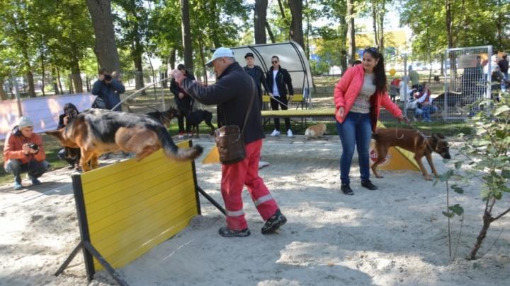 Первая площадка для выгула собак появилась в Первомайском районе Ростова