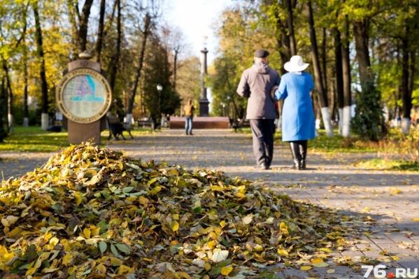 Мэр приглашает всех неравнодушных ярославцев выйти на уборку опавшей листвы
