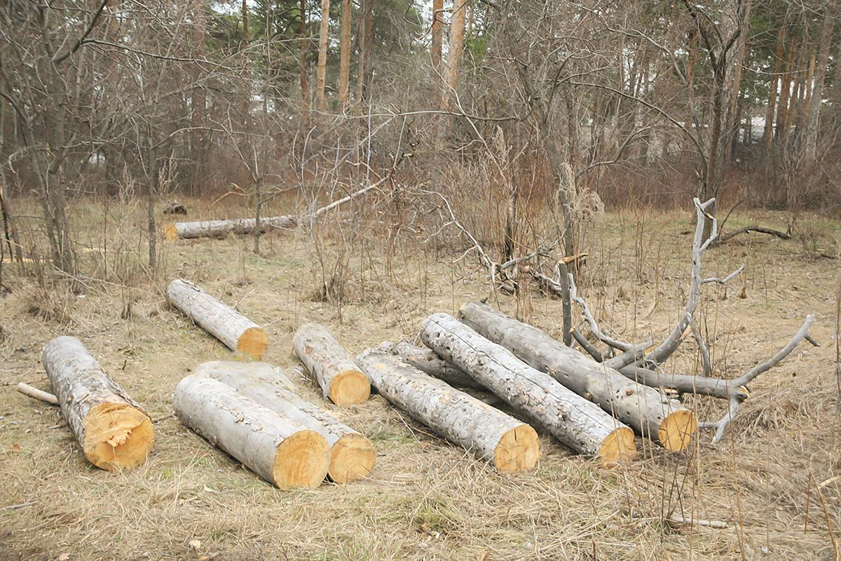 На месте, где раньше были деревья, теперь ровная площадка и бревна