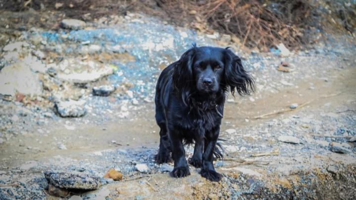 На Текучева мужчина расстреливал бродячих собак
