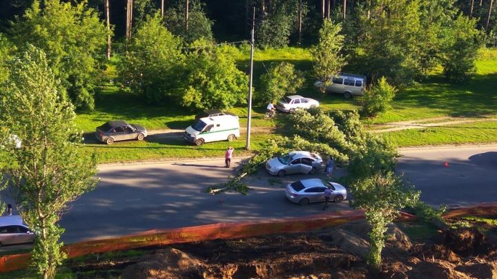 В Перми на Парковом упавший тополь полностью перегородил дорогу