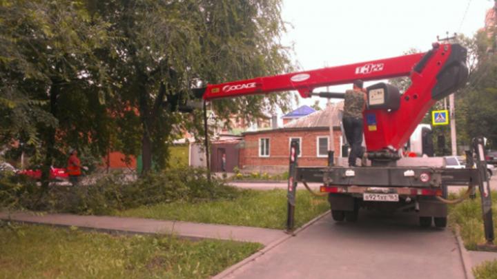 В Ростове продолжают спиливать аварийные деревья