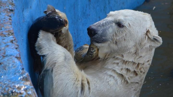 Бочки, мячи и куклы: пермяков просят подарить животным зоопарка игрушки на День защитника Отечества