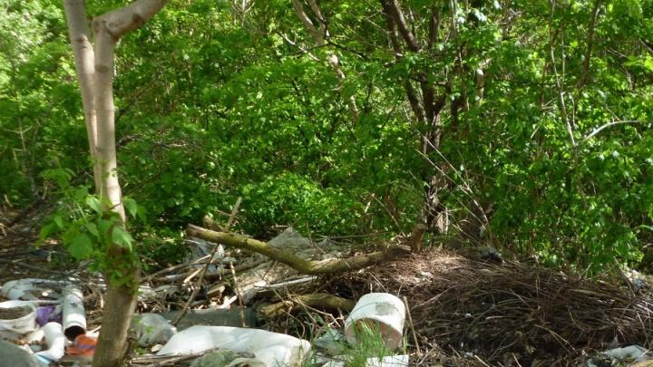 На Дону главу сельского поселения наказали за отсутствие мусорных контейнеров