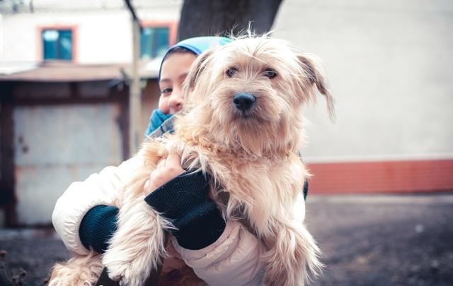 Живущей в ярославском баре собаке ищут хозяина