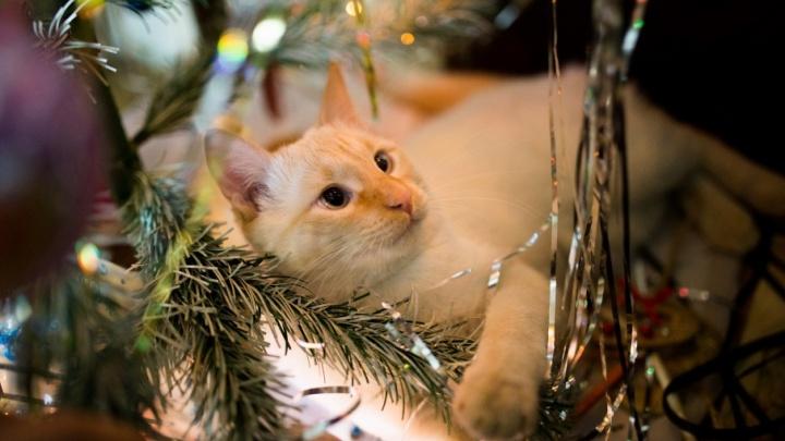 Какой подарок ты заслужил от Деда Мороза?