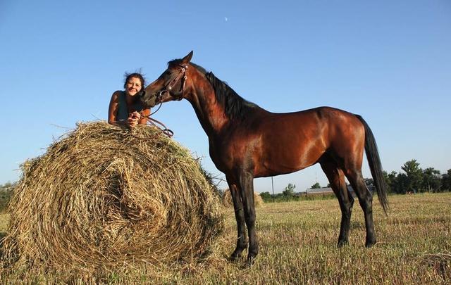 Ростовчанка стала владелицей четырех лошадей