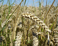 «Газпромнефть-Тюмень» наградили за поддержку аграриев