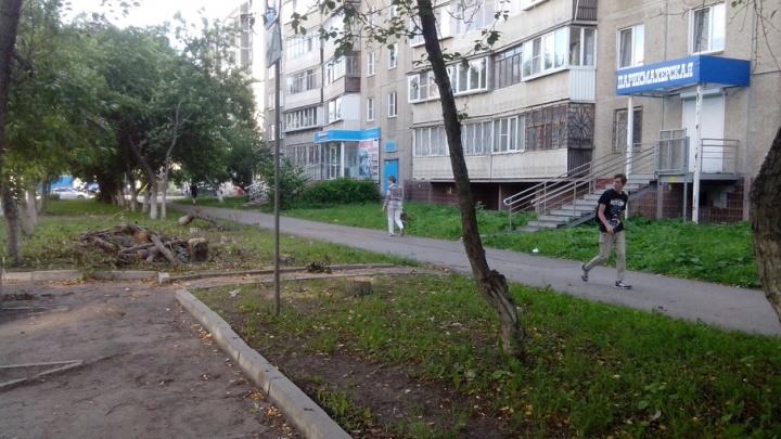 На северо-западе Челябинска вырубили яблоневую аллею