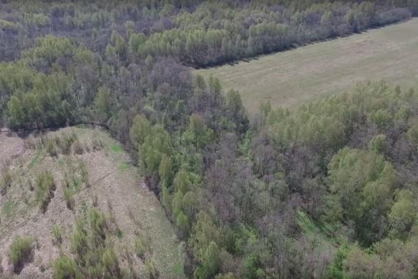 За ярославскими лесами будут следить с воздуха