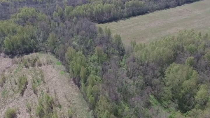 За «черными лесорубами» в ярославских лесах будут следить с воздуха