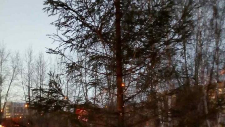 Ёлочки без иголочки: лысые новогодние деревья, которые поставили в тюменских дворах, обещают заменить