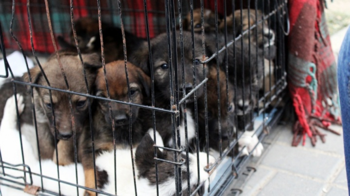 Жестоко убивавшие собак директор и сотрудники «Горпитомника» задержаны в Волгограде