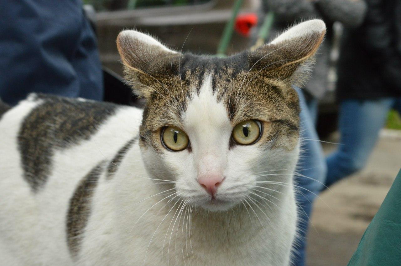 Все запомнят Марсика добрым и милым котом