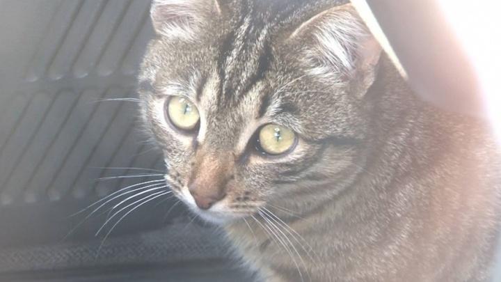 В Челябинске спасли котов, которых хозяева неделю держали запертыми в автомобиле