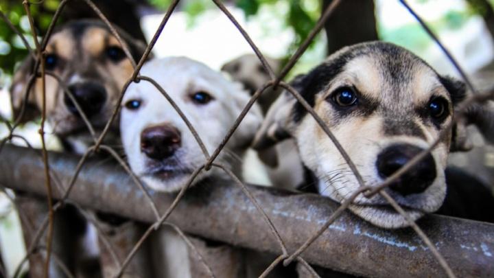 «Те, кто подкармливают своры бездомных собак, больные»: ростовчанин предложил наказывать таких людей