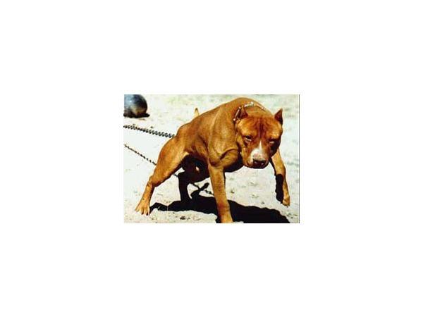 http://www.taringa.net/posts/mascotas/9459499/las-razas-de-perros-mas-peligrosas-del-mundo_.html