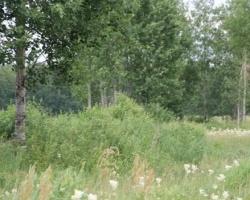 «Золотой лес» – новый поселок на Московском тракте