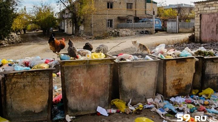 «Перенести контейнерные площадки к дороге»: совет при прикамском УФАС обсудил изменения в мусорной сфере