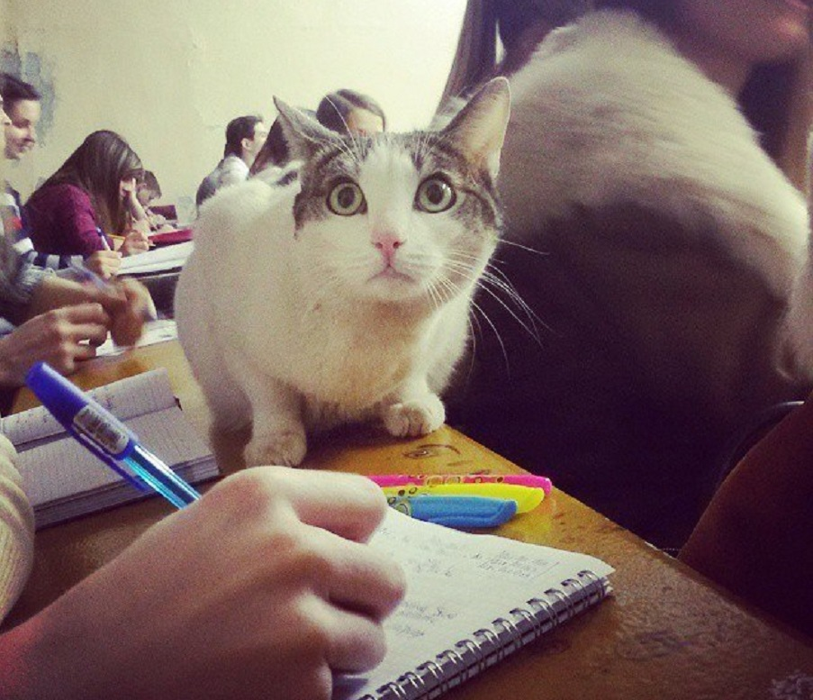 Кот беззастенчиво сидел на парах