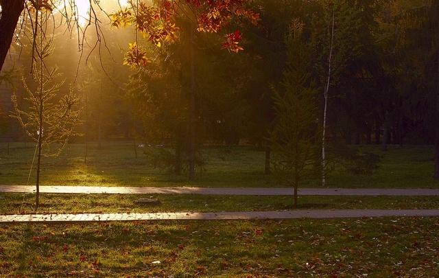 Почти миллион рублей получит Новодвинск на благоустройство городского парка