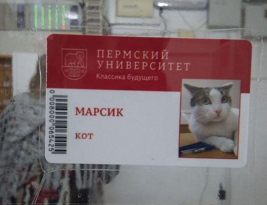Марсик был первым животным в университете, у которого появился пропуск