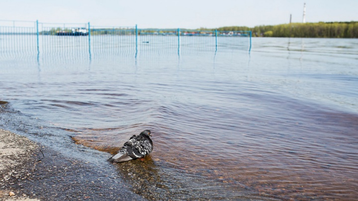 За купание в неположенном месте ярославцев будут штрафовать