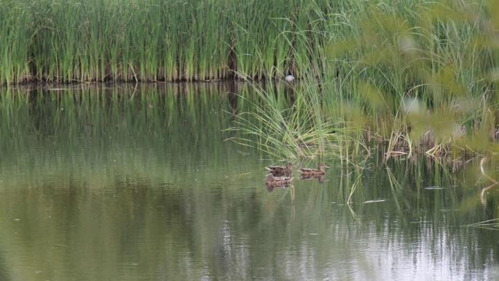 В Самаре из прудов на Воронежских озерах вывезли сто КАМАЗов грязи