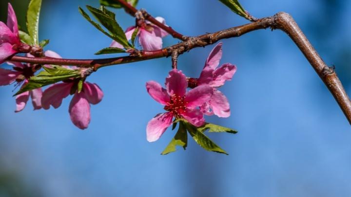 Май в Волго-Ахтубинской пойме: жужжит, цветет и пахнет