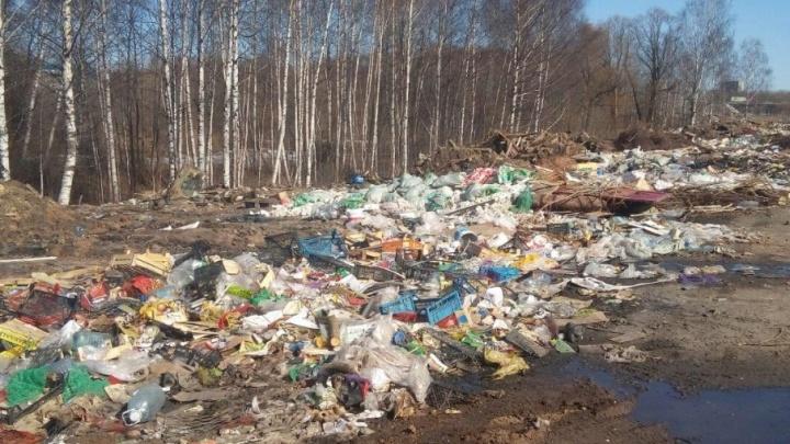 В двух районах Ярославля выгребли 350 тонн мусора: где копились свалки