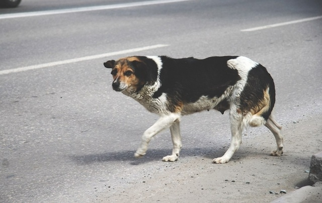 С сотни тюменских улиц уберут бродячих собак