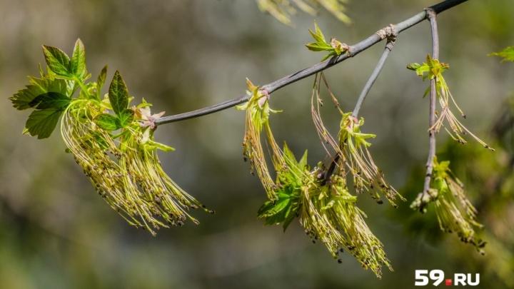МЧС: в Прикамье порывы ветра усилятся до 22 метров в секунду