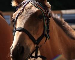 Где в Перми покататься на лошадках?